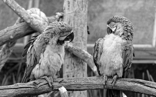 Brunnenin blogissa retoriikasta: miksi vaikuttavaa puhetta voi ja kannattaa harjoitella.