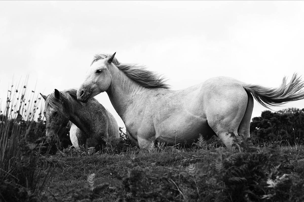 Brunnenin blogi: PalkitsevA asiakassuhde on kuin hevoskuiskaus.