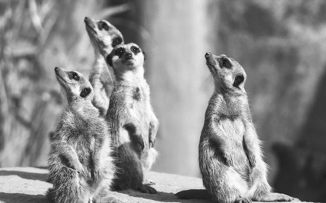 Brunnenin blogi: Utelias tekee hyvää viestintää