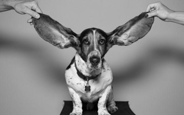 Blogi: Kuuleeko kukaan?
